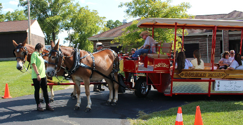 Mule and wagon at Ice Cream Social / Celebrate Mt. Healthy